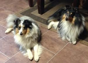Louie och Kutzie